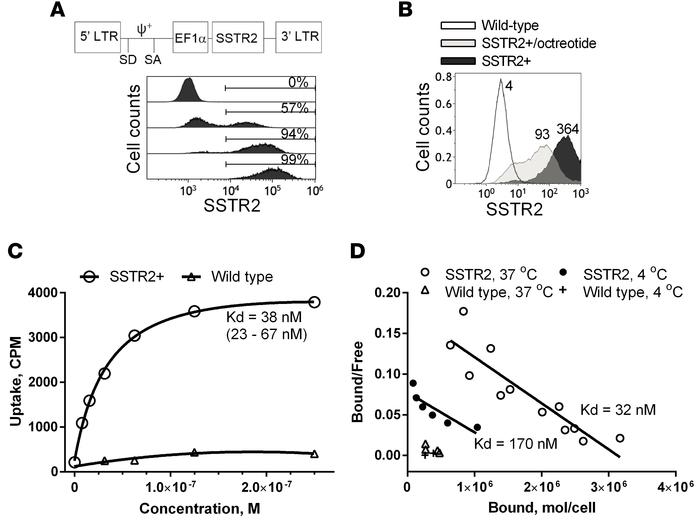 Expression of human SSTR2 by lentivirus vector in T cells. (A) A schemat...