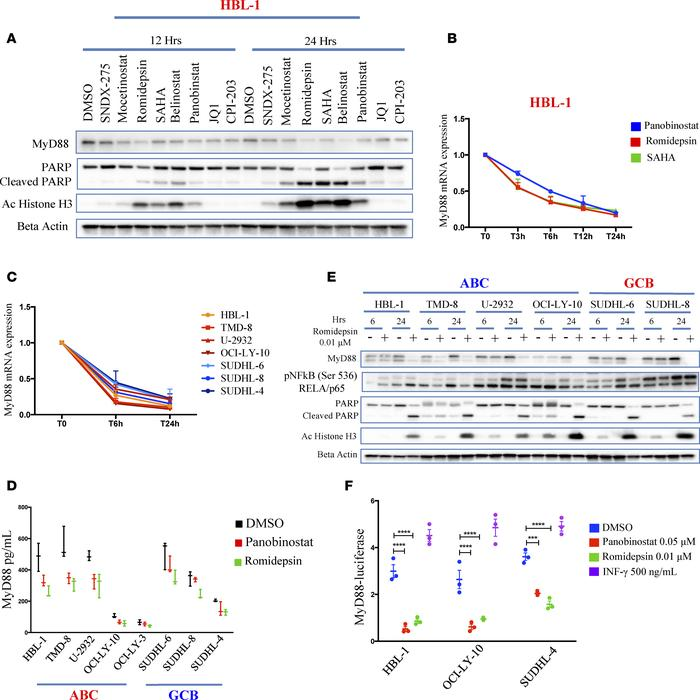 HDAC inhibitors transcriptionally decrease MyD88. (A) Western blot showi...