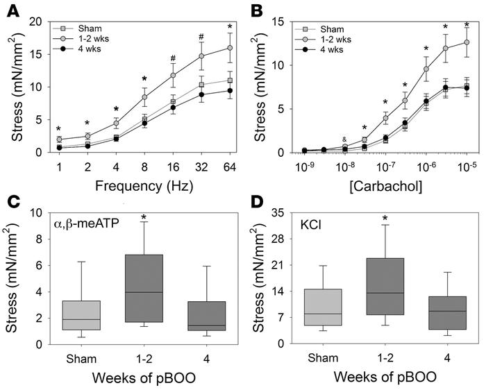 Partial bladder outlet obstruction (pBOO) in wild-type mice reveals time...