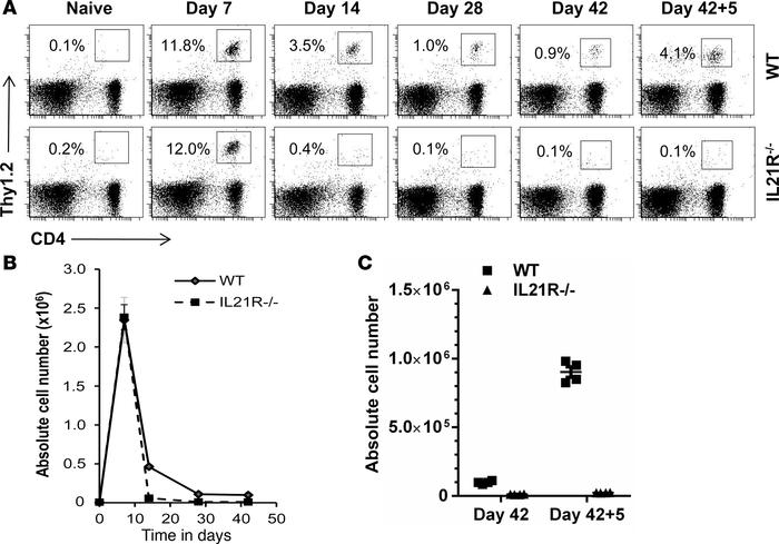 Lack of IL-21 signaling in HA-specific CD4 T cells leads to defective CD...