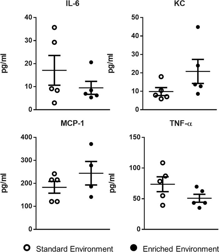 No difference in inflammatory cytokines in enriched mice following 24 ho...
