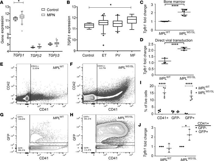 TGF-β1 is overexpressed in human primary myelofibrosis samples and MPLW5...