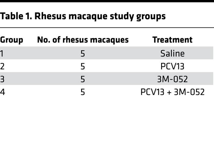 Rhesus macaque study groups