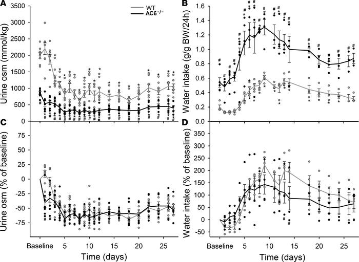 Li+ reduces urine osmolality and increases water intake in AC6–/– and WT...