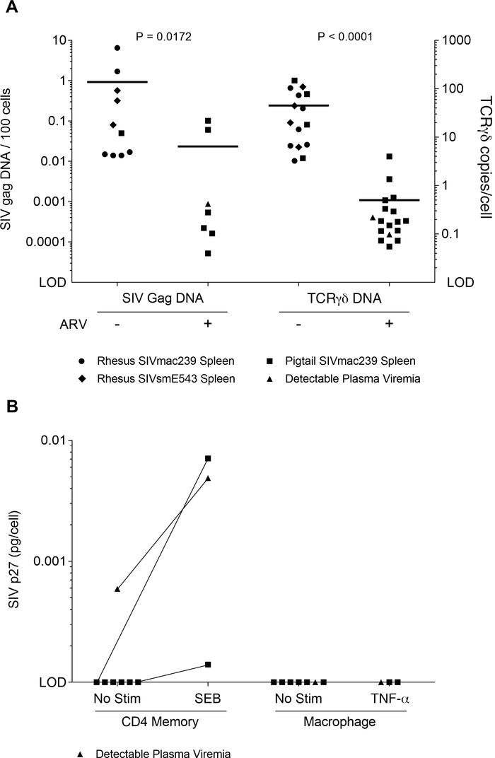 Viral DNA, rearranged TCR DNA, and replication-competent SIV in ARV-trea...