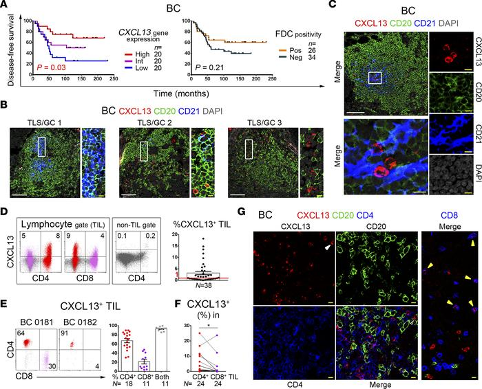 CXCL13 is principally produced by CD4+ tumor-infiltrating lymphocytes (T...