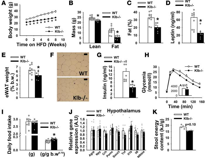 Resistance to high-fat diet–induced obesity in Klb–/– mice. (A) Body wei...