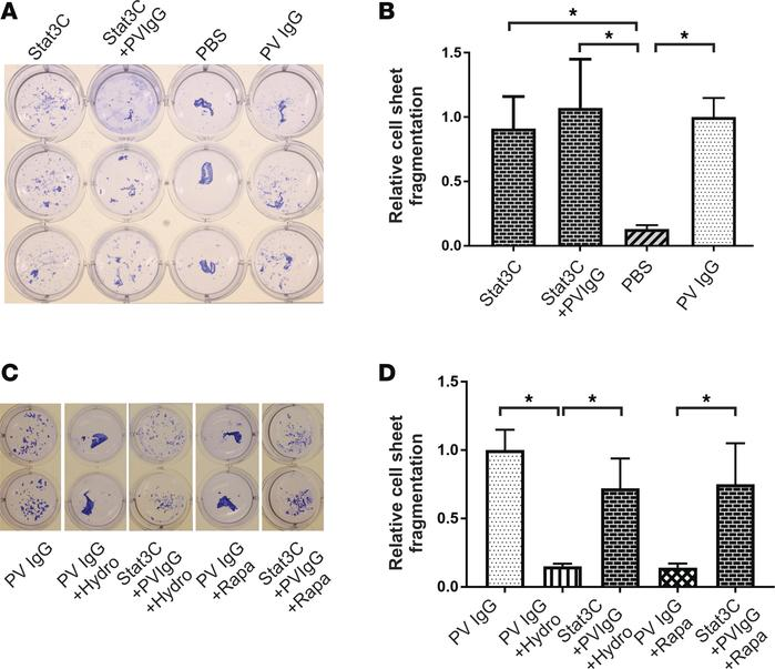 Constitutive activation of Stat3 (Stat3C) inhibits the protective therap...