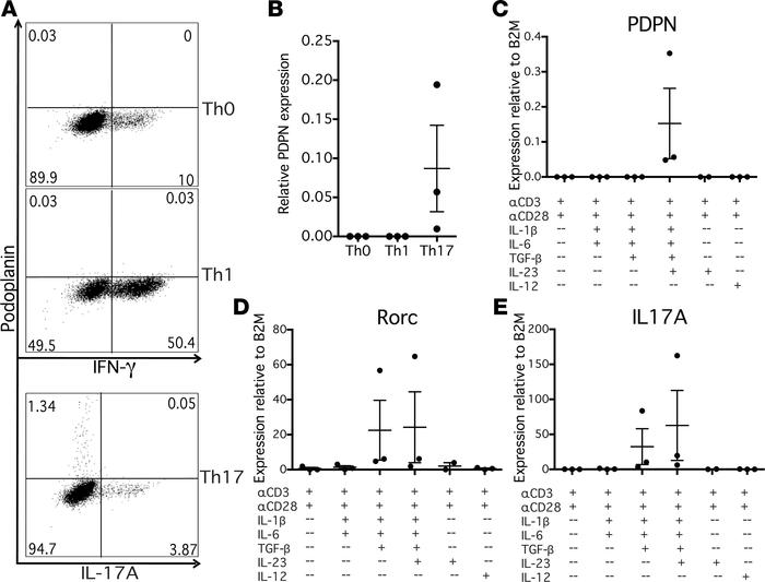 Podoplanin is specifically induced on CD4+ T cells under Th17 conditions...