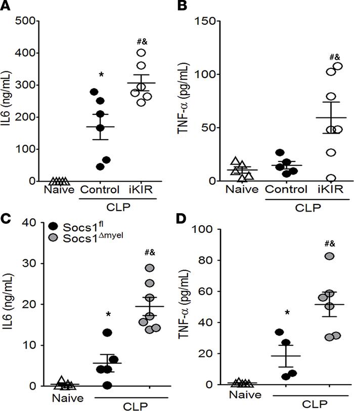 Pharmacological inhibition of SOCS1 or SOCS1 deficiency increases the sy...