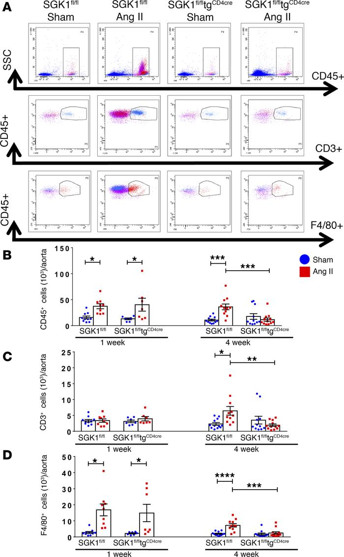 T cell SGK1 deficiency prevents the chronic phase of angiotensin II–indu...