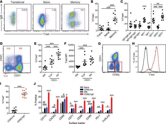 T-bet expression in memory B cell subsets from healthy human peripheral ...