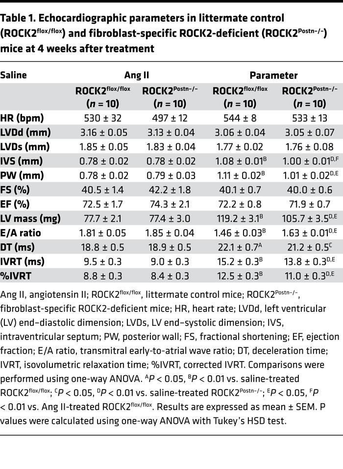 Echocardiographic parameters in littermate control (ROCK2flox/flox) and ...