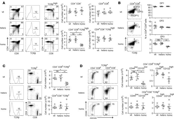 β5t-G49S variation in mice impairs CD8+ T cell production in thymus. (A)...