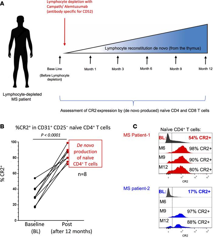Higher complement receptor 2 (CR2) expression by human naive CD4+ T cell...
