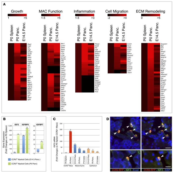 Transcriptional profiling of CCR2+ myeloid subsets. (A) Heatmaps of sele...