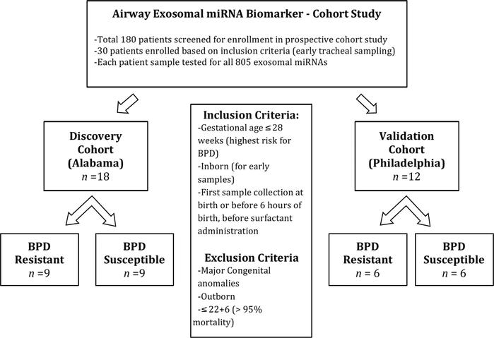 Early predictive airway exosomal miRNA signature for BPD: prospective co...