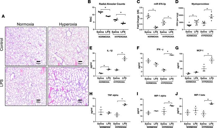 Postnatal Proteobacterial LPS decreases miR 876-3p expression in vivo. W...