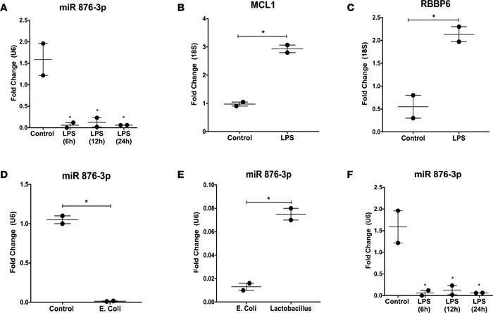 Proteobacteria exposure decreases miR 876-3p expression in vitro. Normal...