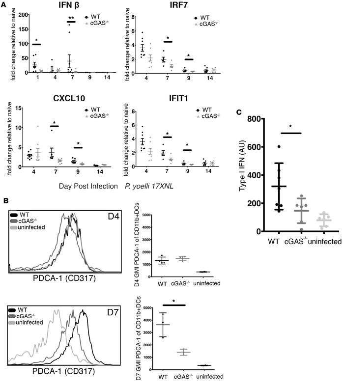 Deficiency in cGAS is associated with altered type I IFN signature. (A) ...