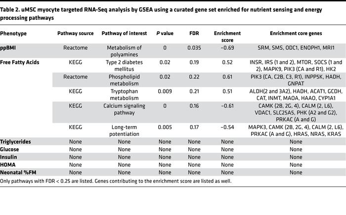 uMSC myocyte targeted RNA-Seq analysis by GSEA using a curated gene set ...