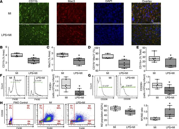 Chronic inflammation decreased reparative M2 macrophage polarization at ...