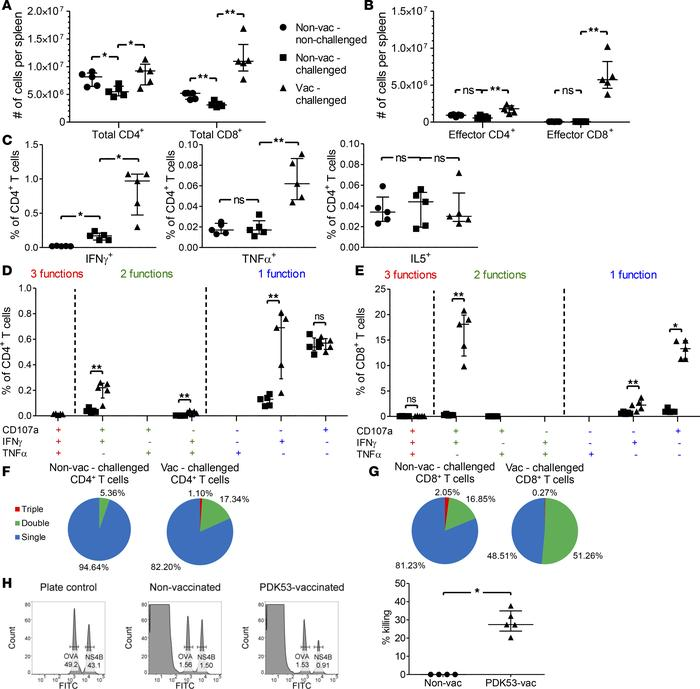 T cell responses upon D2Y98P-PP1 challenge in PDK53-vaccinated mice born...