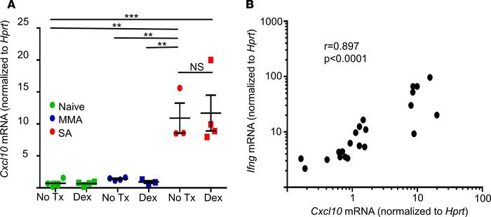 Cxcl10 expression is elevated in a mouse model of severe asthma and cor...