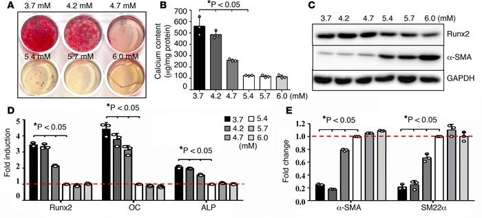 Lower physiological concentrations of potassium induced VSMC osteogenic ...