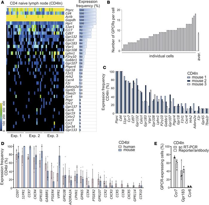 Single-cell GPCR expression in freshly isolated murine and human CD4 T c...