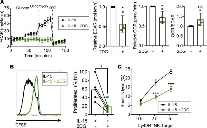Glucose metabolism blockade during activation decreases NK cell prolifer...