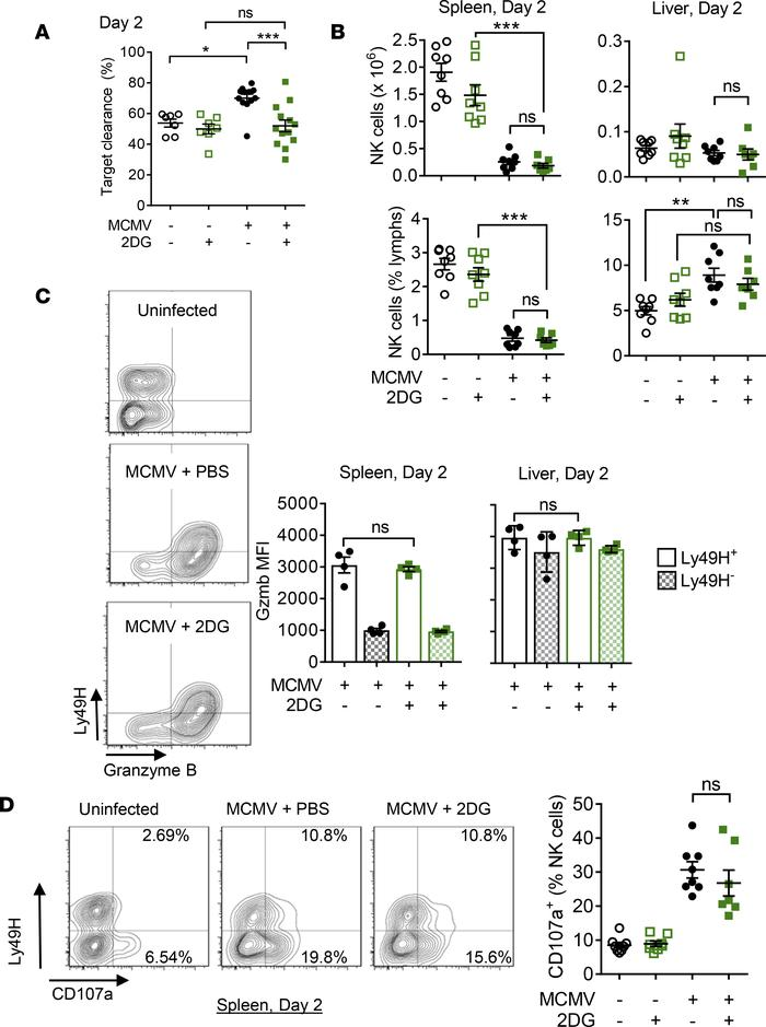 2DG treatment in vivo causes decreased target clearance during MCMV infe...