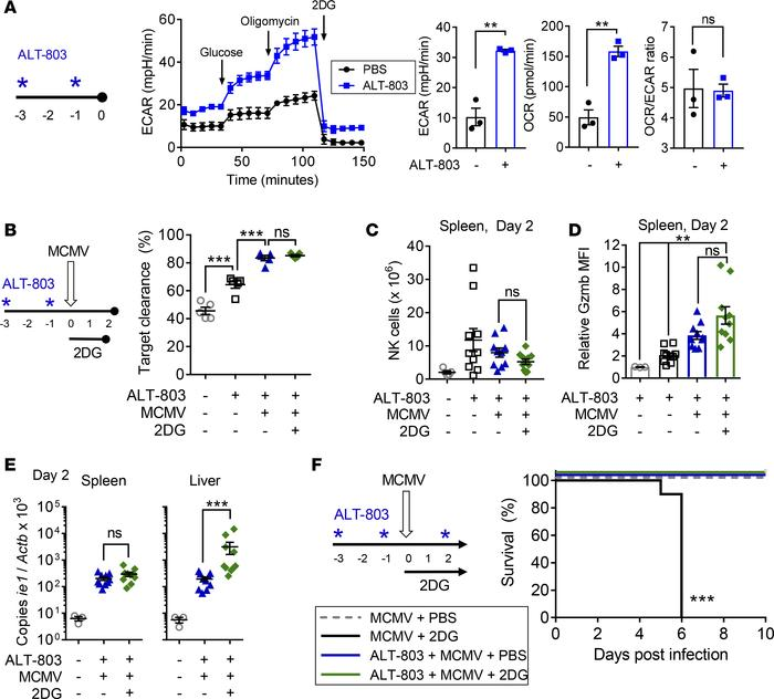 NK activation with ALT-803 rescues MCMV susceptibility caused by 2DG tre...