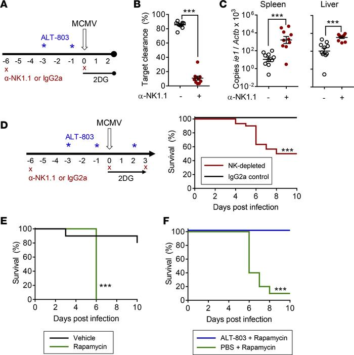 ALT-803 rescue of 2DG-treated mice requires NK cells, and ALT-803 primin...
