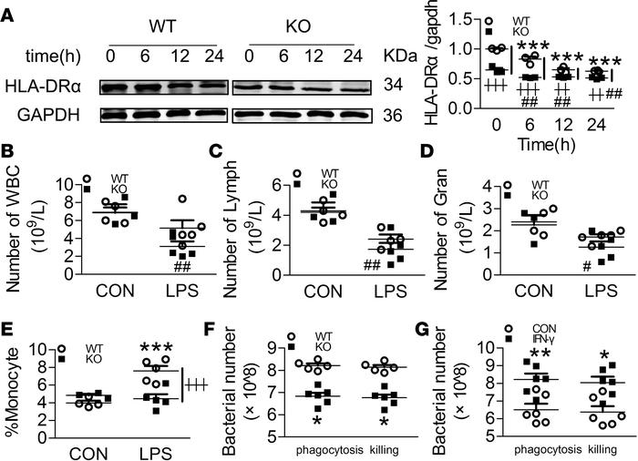 Swiprosin-1 deficiency impairs the LPS-induced immune activation in peri...