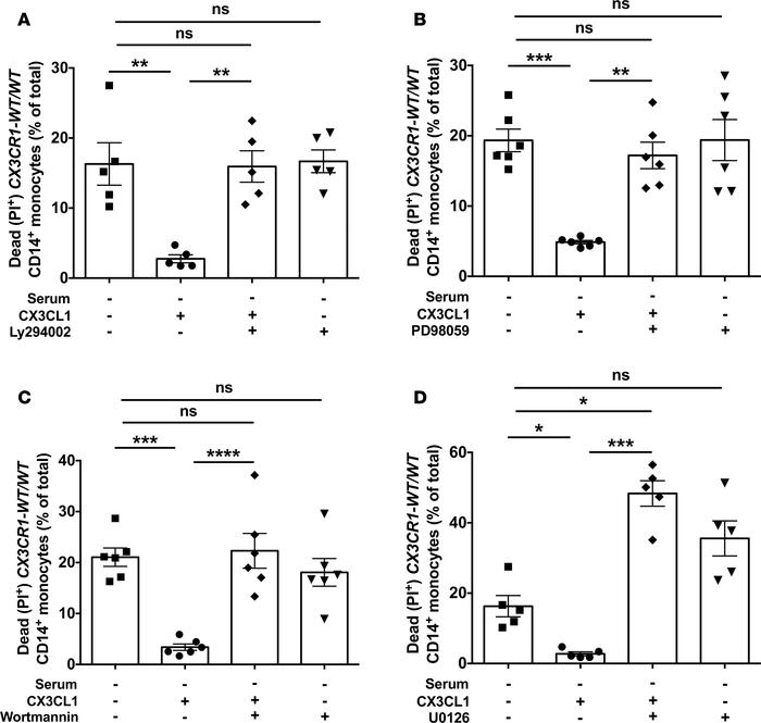 CX3CL1-induced survival rescue after serum starvation in CX3CR1-WT/WT mo...
