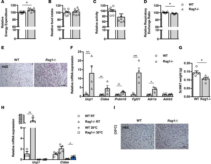 Beige tissue formation in the scWAT is increased in lymphocyte-deficient...