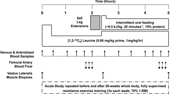 Acute study schematic. 1-RM, 1-repetition maximum.