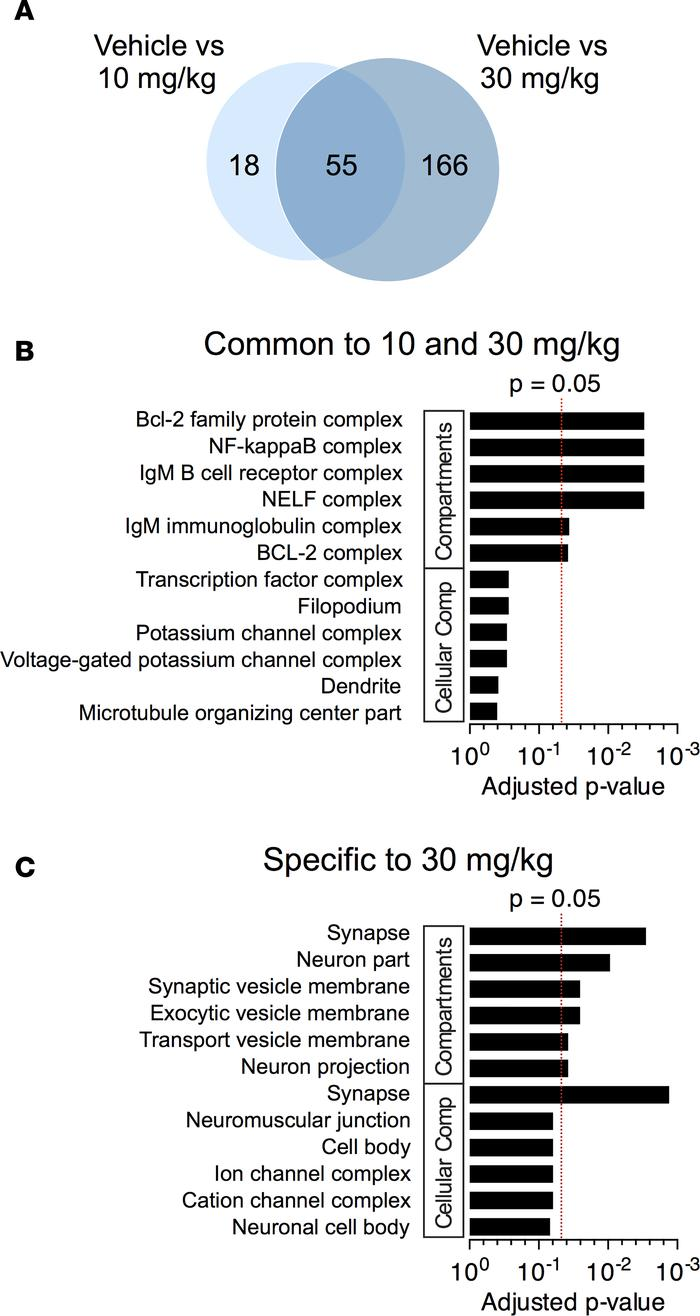 Functional annotation of DEGs in the striata of YAC128 HD mice. (A) Over...