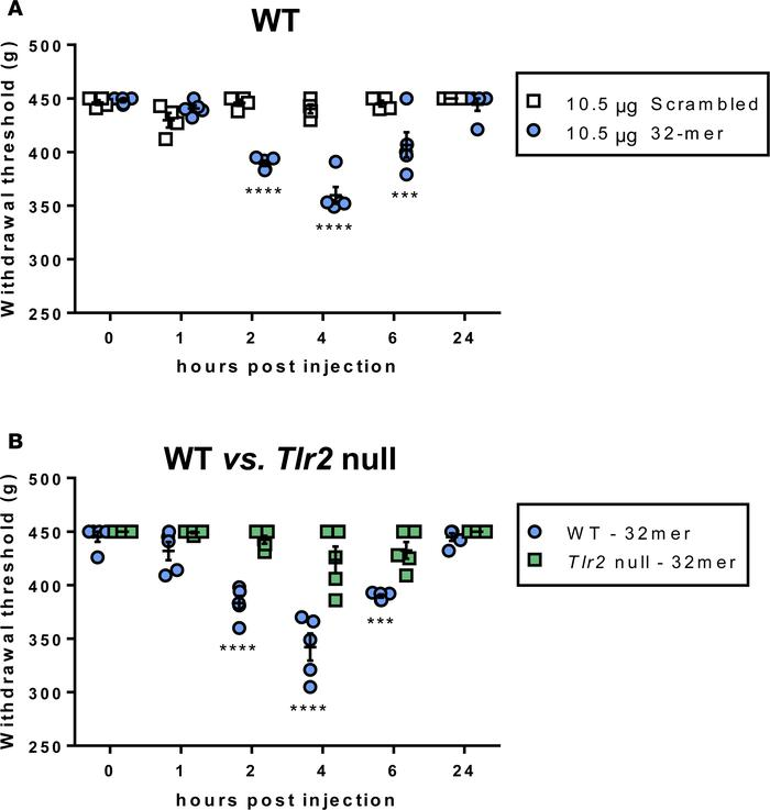 Intra-articular injection of synthetic 32-mer induces knee hyperalgesia ...