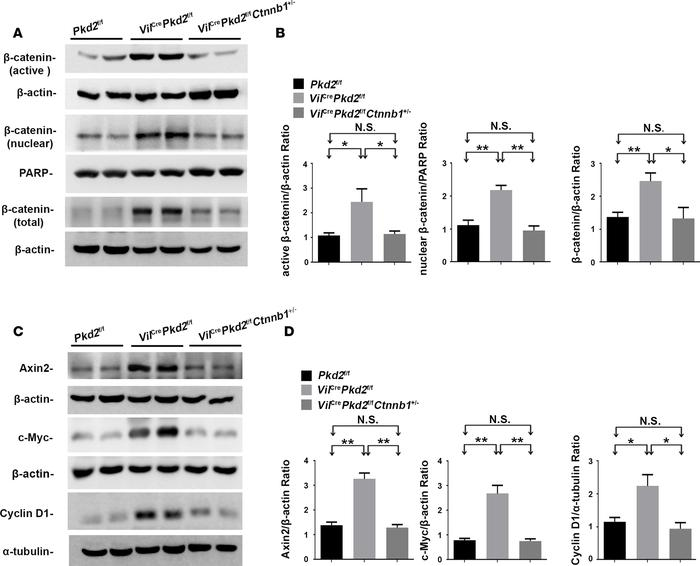 Effects of allelic reduction of the Ctnnb1 gene. (A and B) Allelic reduc...