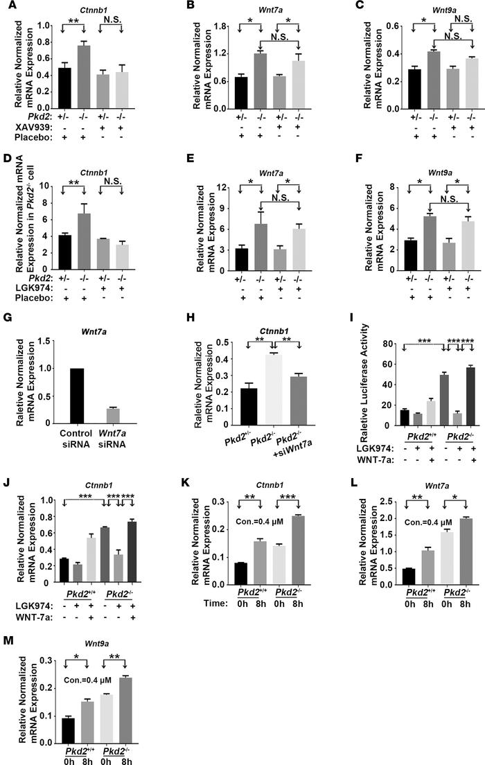 PC2 deficiency upregulates Ctnnb1, Wnt7a, and Wnt9a expression. (A–C) XA...