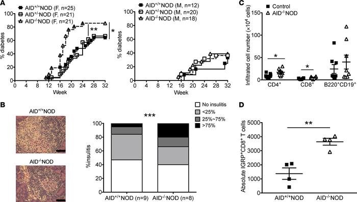 AID deficiency promotes the development of T1D in NOD mice. (A) Diabetes...