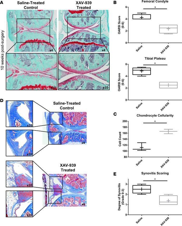 Wnt inhibition reduced cartilage degeneration and synovitis in DMM model...