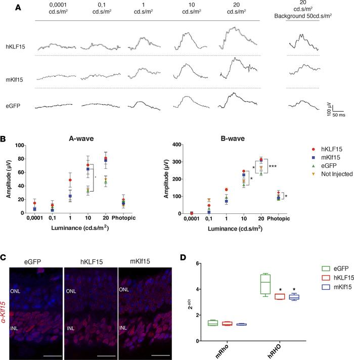 KLF15 ectopic expression preserves retinal function in adRP-transgenic R...