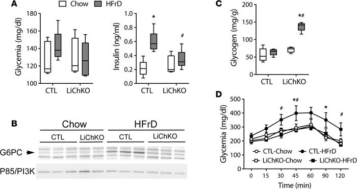 LiChKO mice demonstrate blunted increase in hepatic glucose production i...