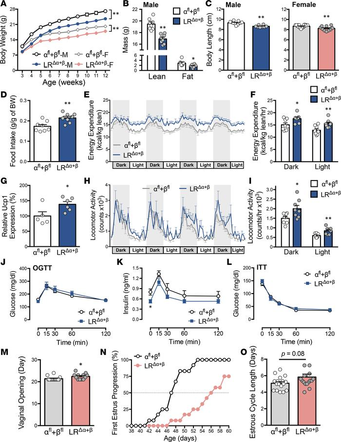 Deletion of PI3Kα and PI3Kβ in LR cells causes changes in energy expendi...