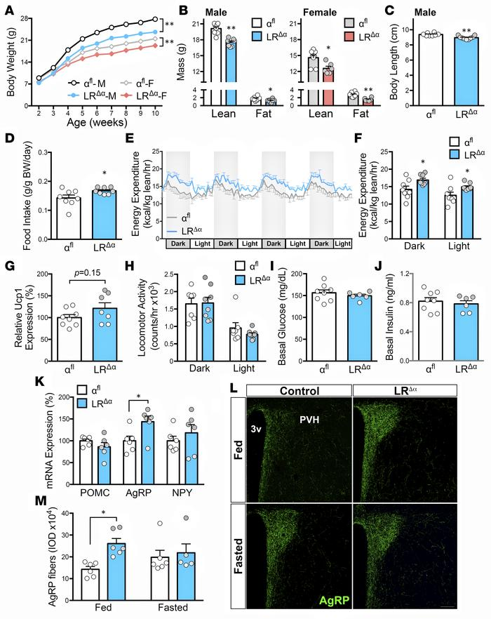 PI3Kα-deleted mice showed changes in food intake, energy expenditure, an...