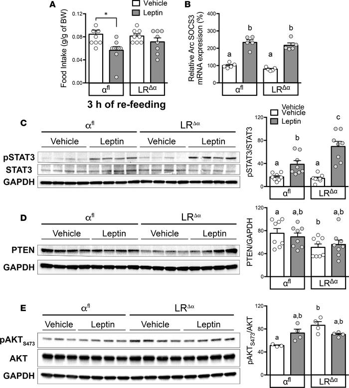 LRΔα mice show enhanced leptin sensitivity and reduced hypothalamic PTEN...