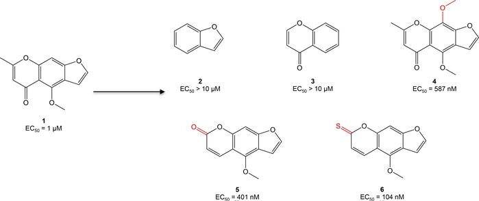 Optimization of compound 1 (C1, visnagin) in an in vivo model of DOX-ind...